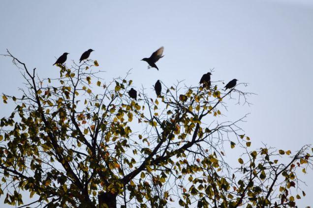 Oiseaux migrateurs (16)