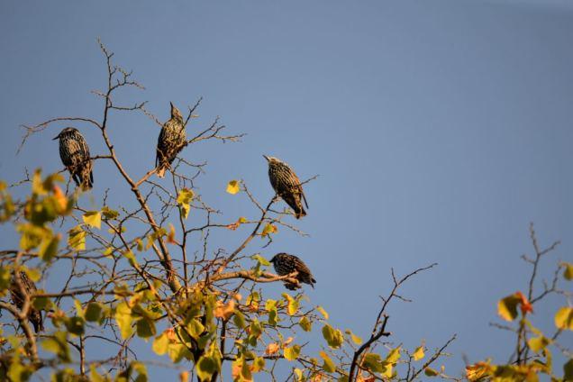 Oiseaux migrateurs (8)