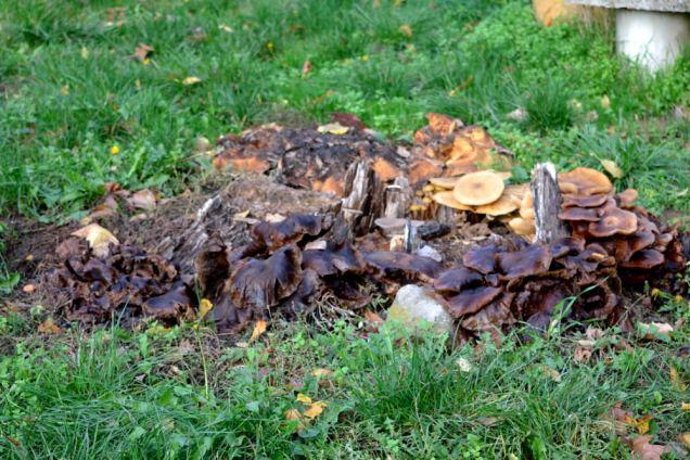 Village de champignons (2)