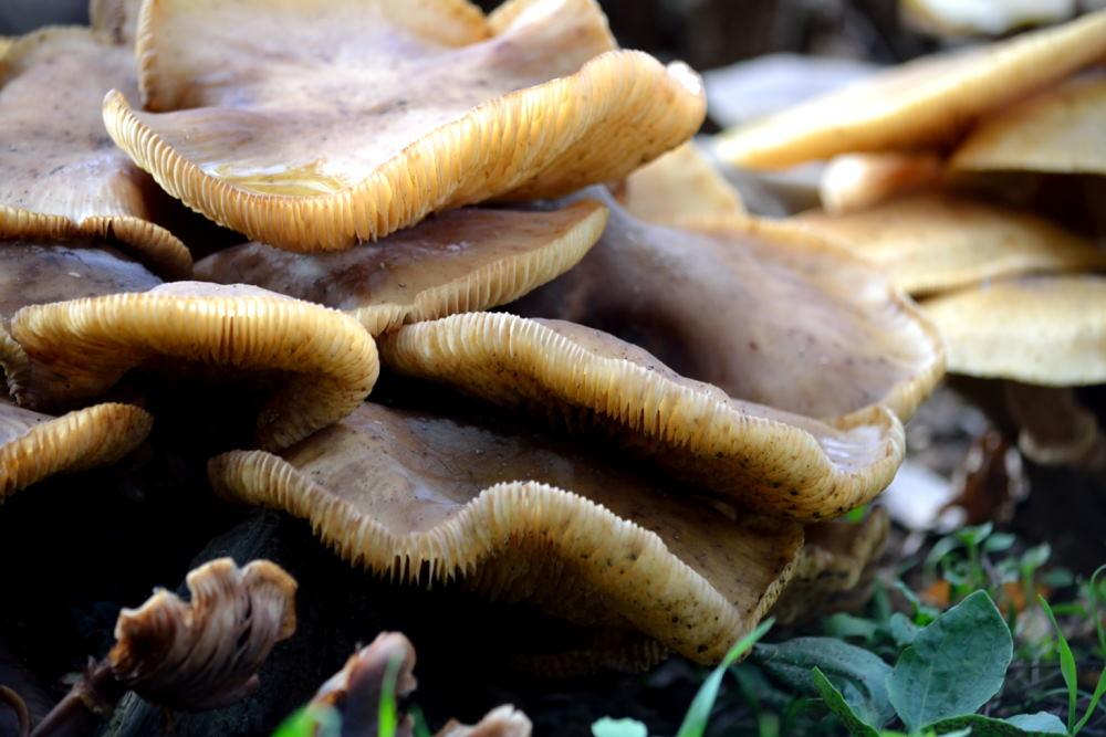 Village de champignons (6)