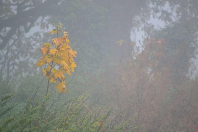 Brouillard d'automne (3)