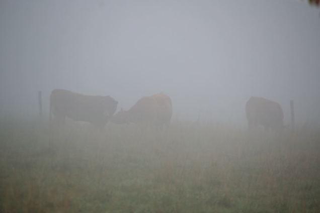 Brouillard d'automne (4)