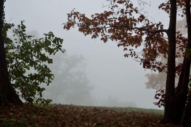 Brouillard d'automne (5)