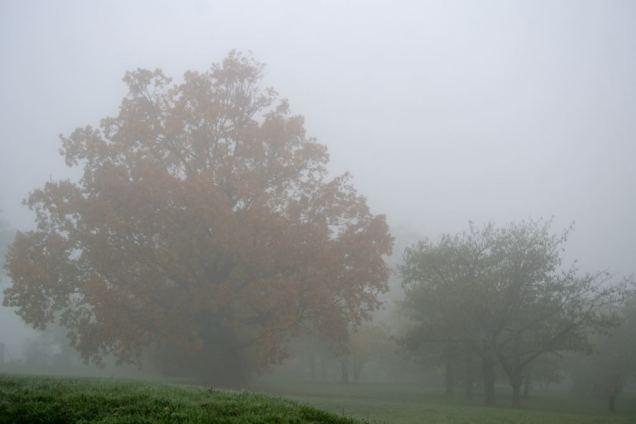 Brouillard d'automne (6)