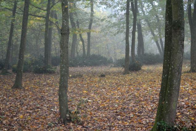 Brouillard d'automne (7)