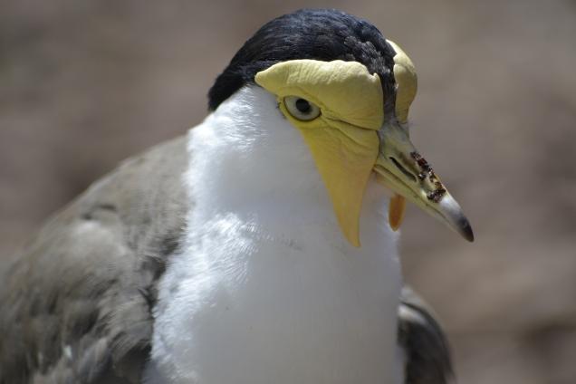Parc des oiseaux (32)