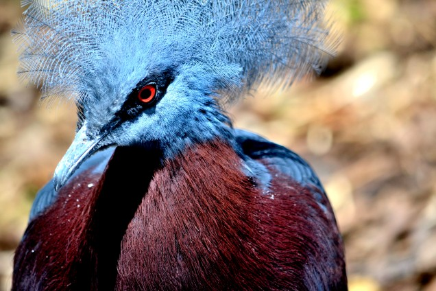 Parc des oiseaux (5)
