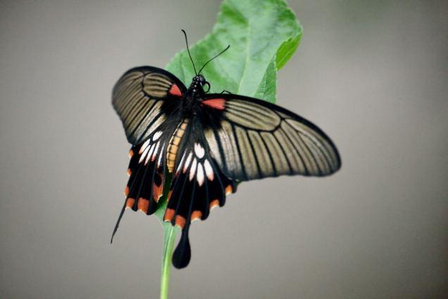 Ferme des papillons (15)
