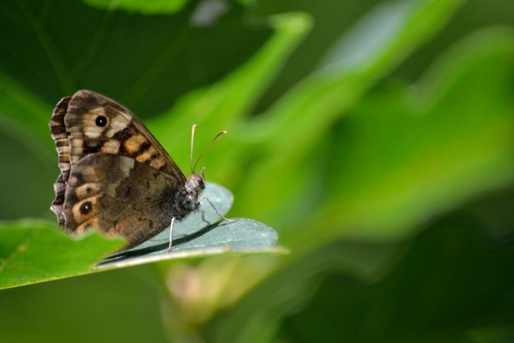 papillons (3)