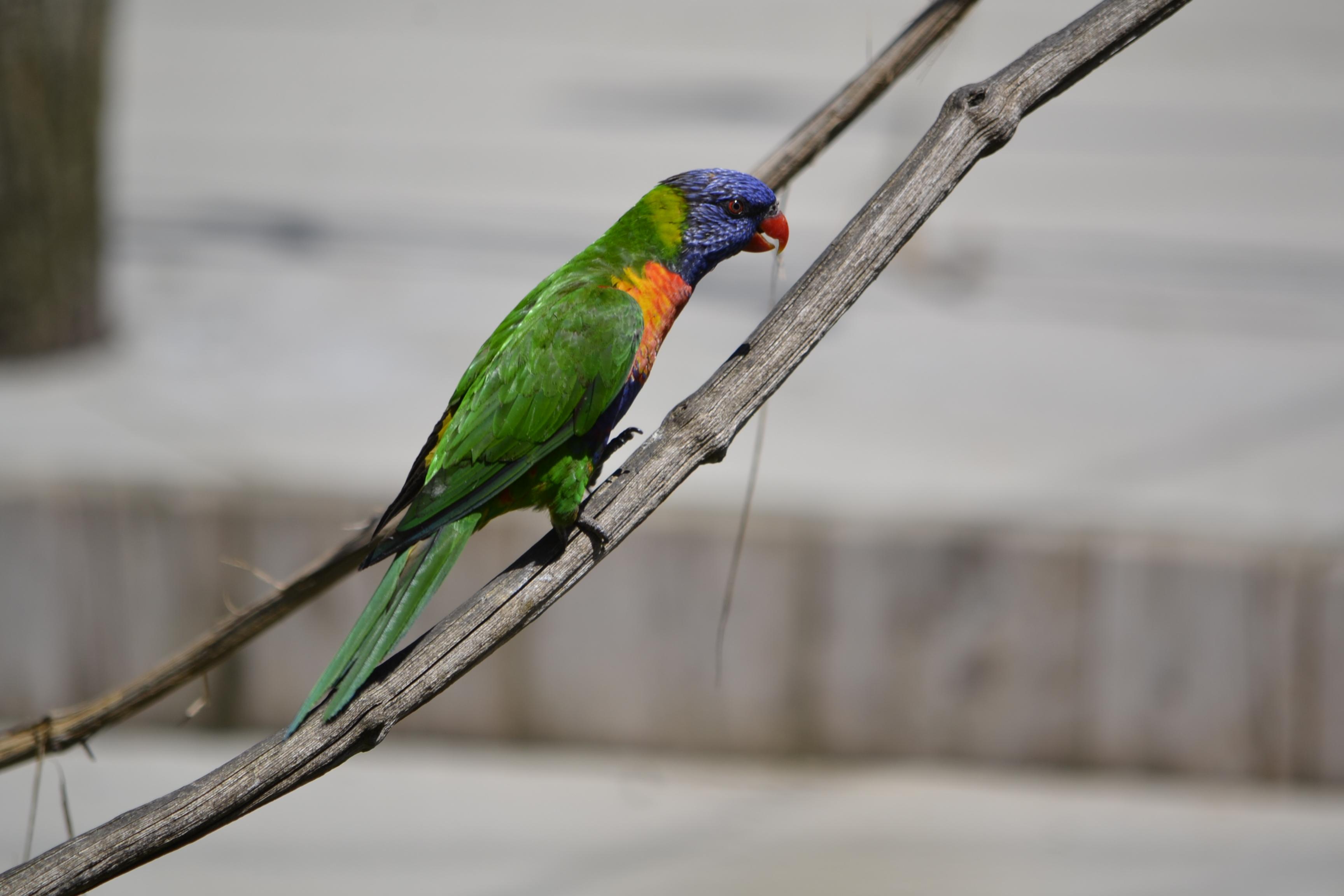 Parc des oiseaux (28)